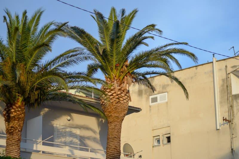 Palm w centrum miasta Makarska, Chorwacja, 16 czerwca 2019 obrazy stock