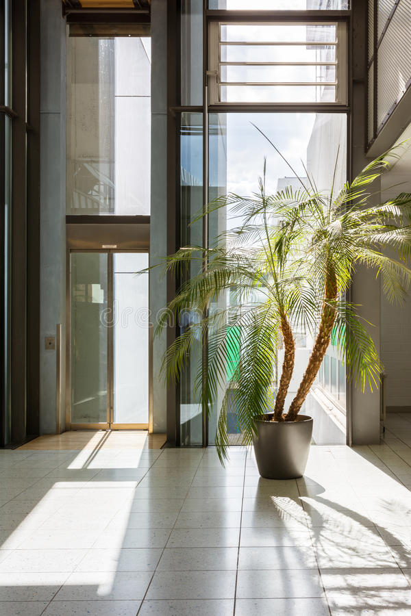 Palm White Modern Tile Floor Office Building Windows Bright Cont. Emporary Elevato stock photo