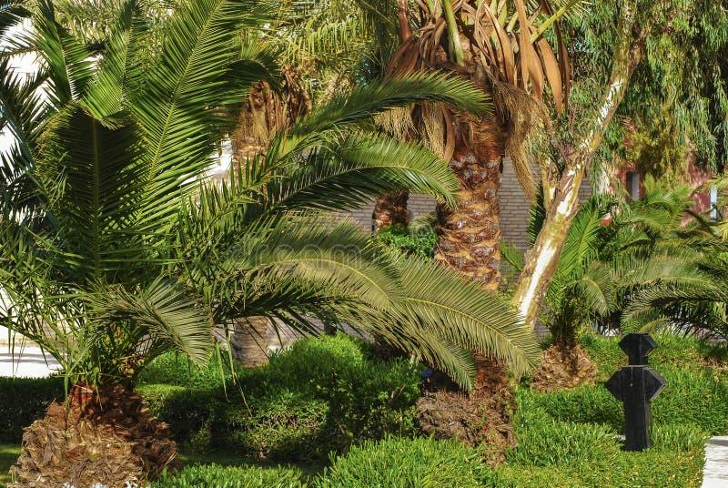 Palm wijd stock foto's