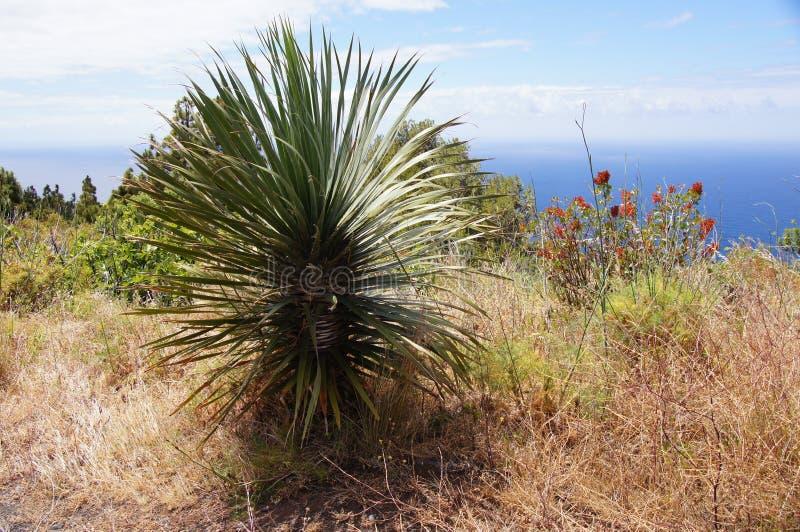 Palm, wilde vegetatie, overzees en wolken royalty-vrije stock afbeeldingen