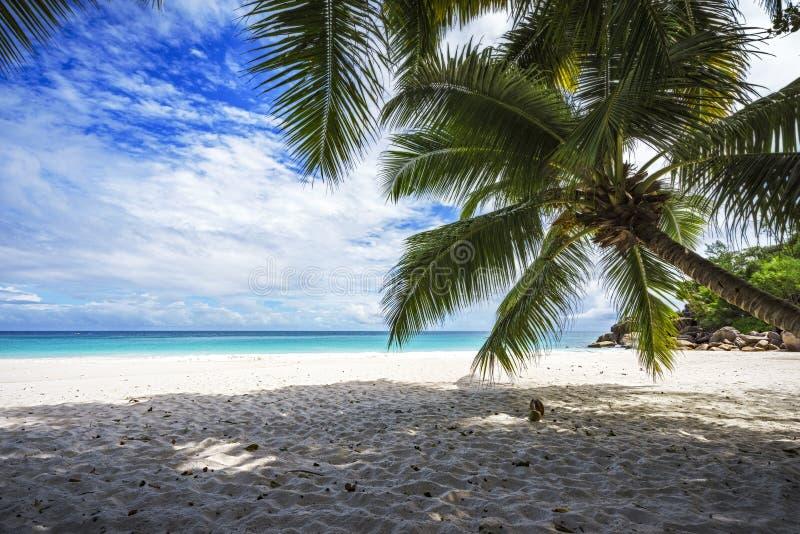 Palm, wit zand, turkoois water bij tropisch strand, paradijs stock afbeelding