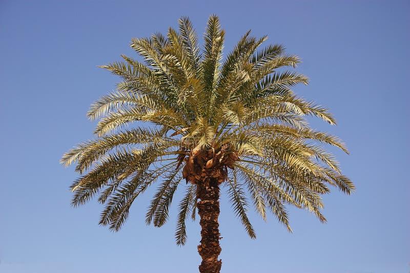 Palm1 stock fotografie