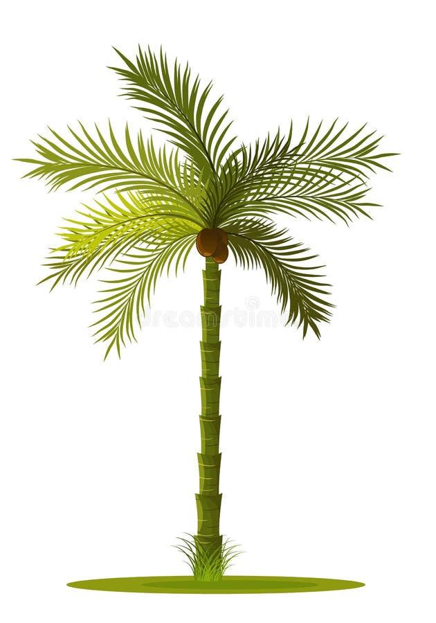 palma-árbol libre illustration