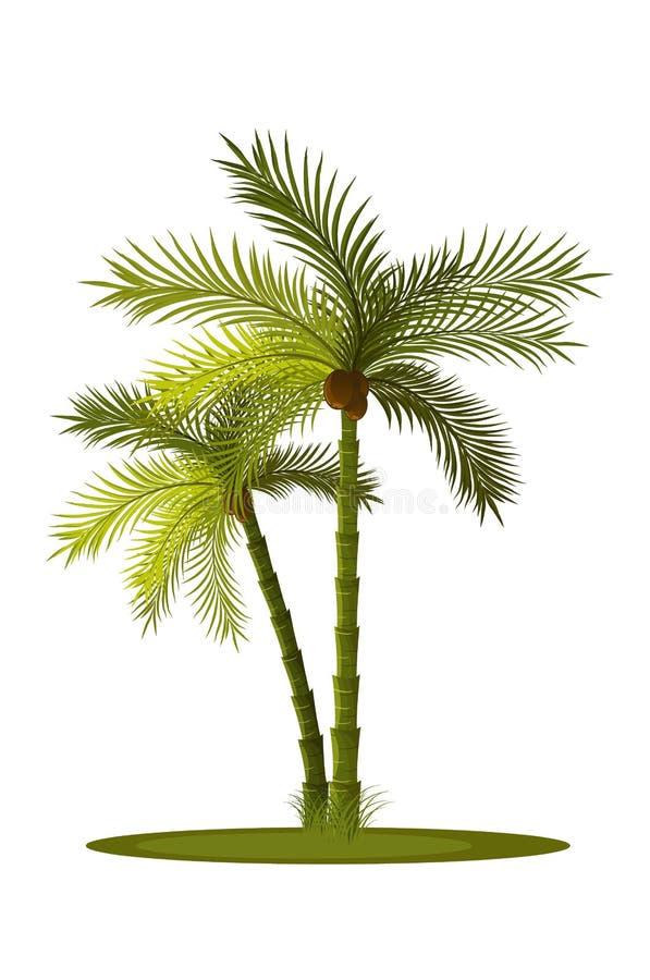 Palma-árbol dos ilustración del vector