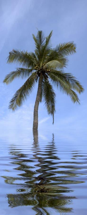 palma obrazy stock