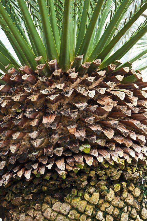 Palma. immagine stock
