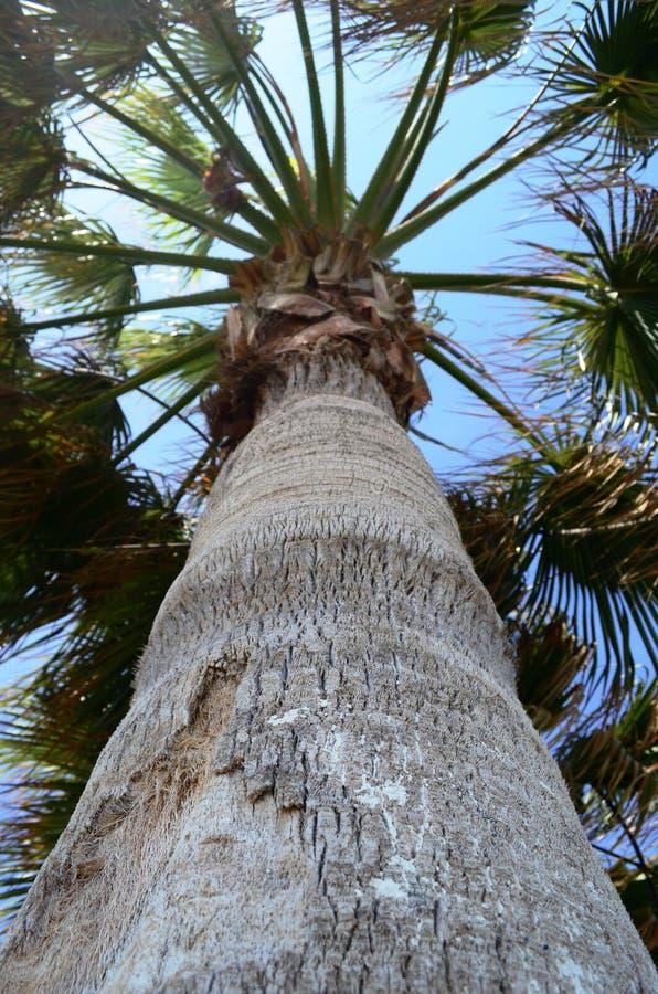 palma immagine stock