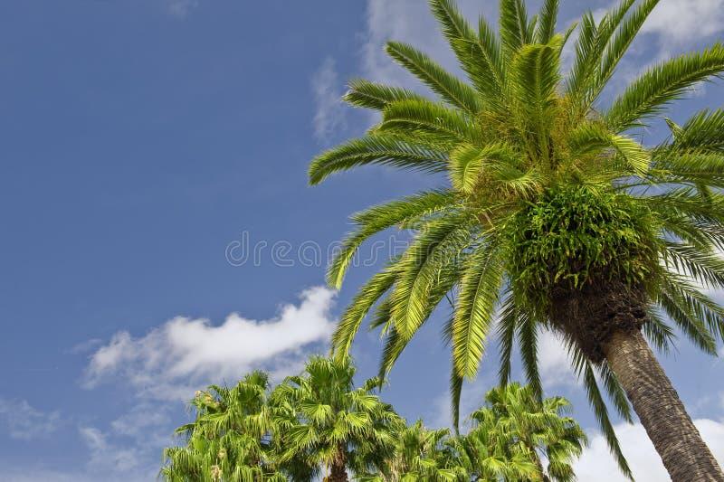 palma fotografia stock