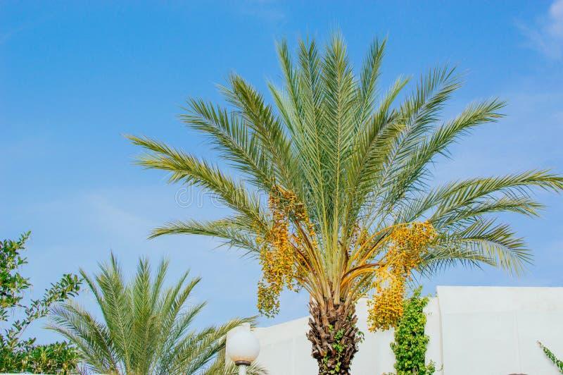 Palma στοκ φωτογραφίες με δικαίωμα ελεύθερης χρήσης