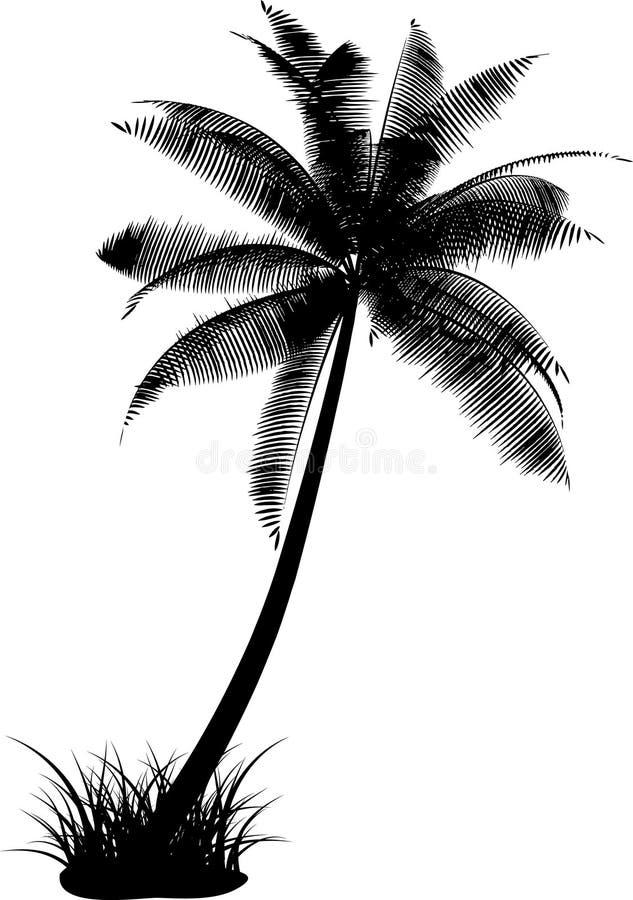 Palma illustrazione vettoriale