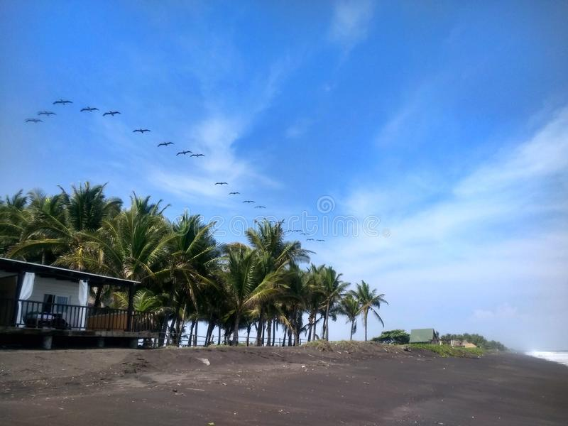Palma, alberi, uccelli, sabbia l'oceano fotografie stock libere da diritti