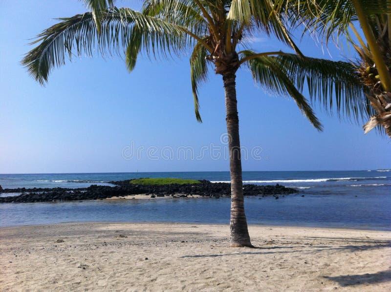 Palma alla spiaggia del porto di Honokohau in grande isola Hawai fotografia stock libera da diritti