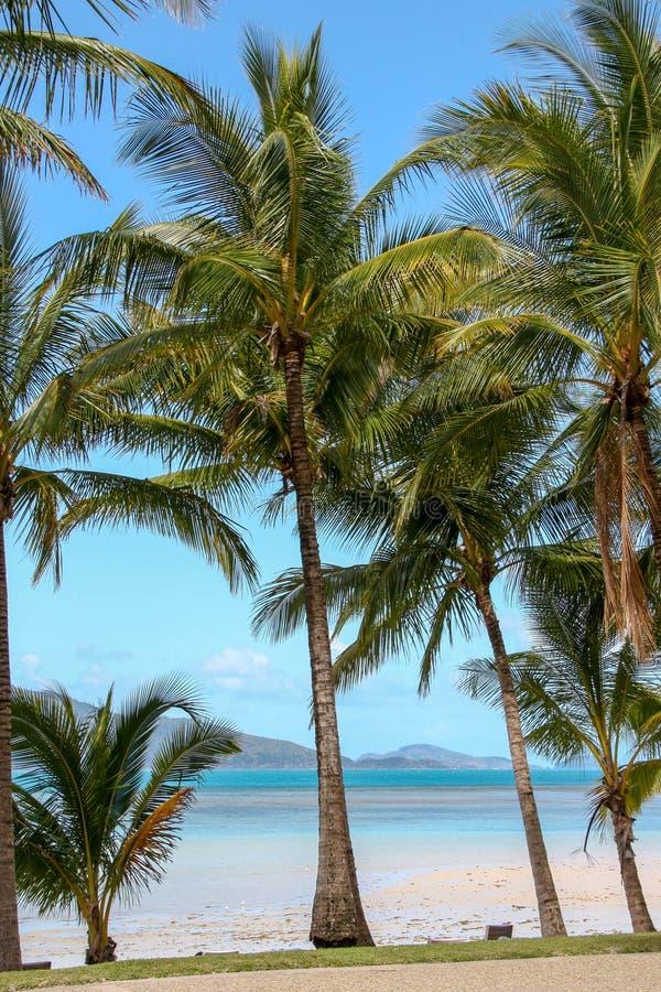 Palma bonita em uma praia fotografia de stock