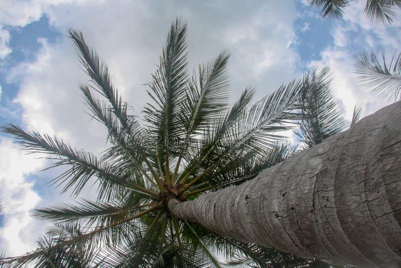 Palma bonita em uma praia foto de stock royalty free