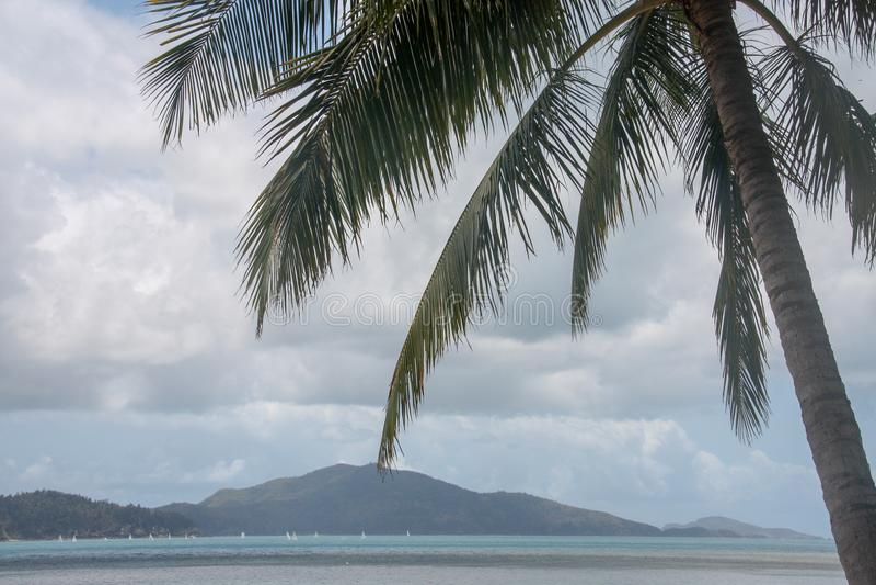 Palma bonita em uma praia fotos de stock royalty free