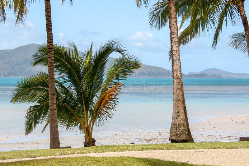 Palma bonita em uma praia fotos de stock