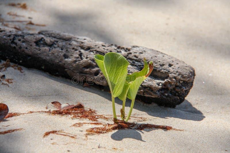 Palma bonita em uma praia imagens de stock