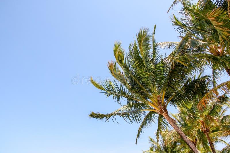 Palma bonita em uma praia imagem de stock royalty free