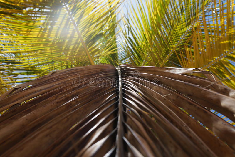 Palma caraibica fotografia stock libera da diritti