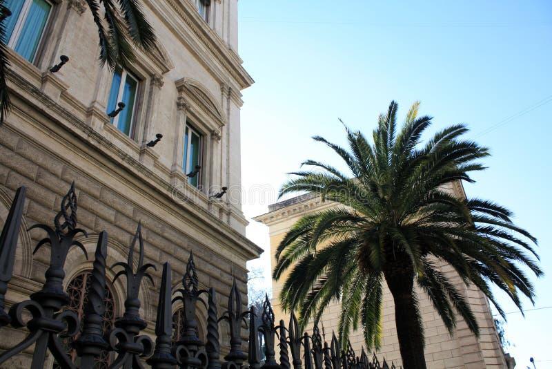 Palma con el edificio Italia rom Día asoleado fotos de archivo libres de regalías