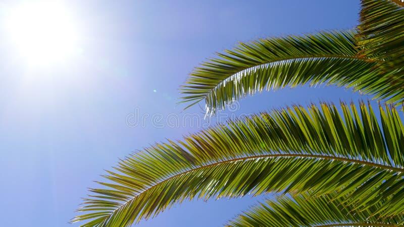 Palma con il fondo del sole immagini stock
