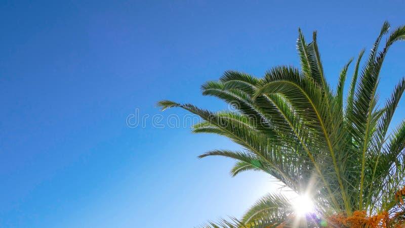 Palma con il fondo del sole fotografia stock libera da diritti
