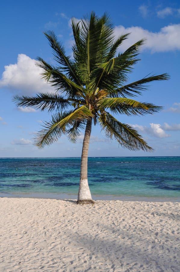Palma con la spiaggia immagini stock libere da diritti