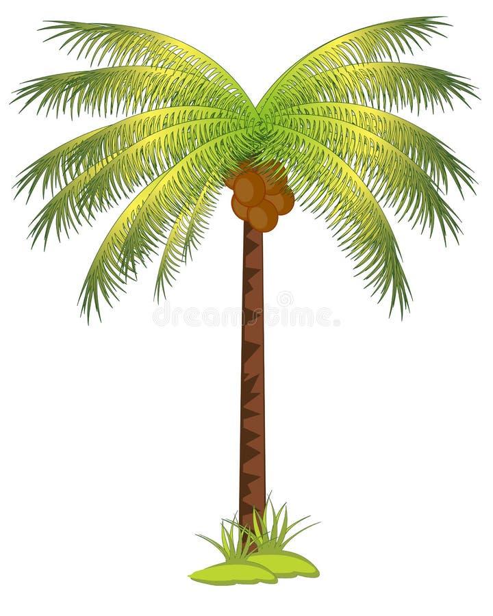 Palma con los Cocos ilustración del vector
