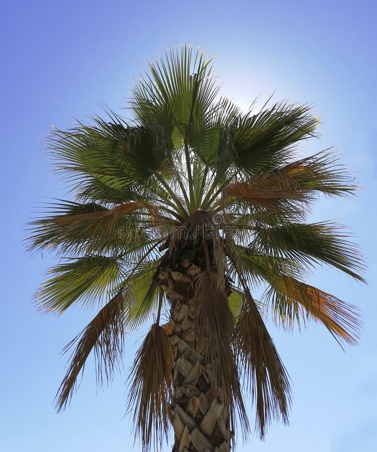 Palma con un fondo soleggiato immagini stock