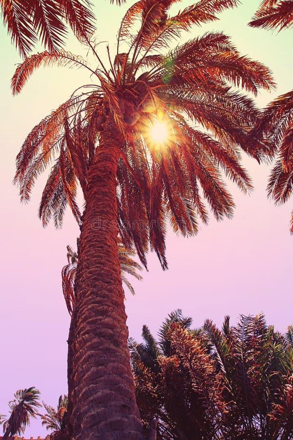 Palma contro il fondo del cielo Sunhine attraverso il ramo della palma fotografie stock libere da diritti