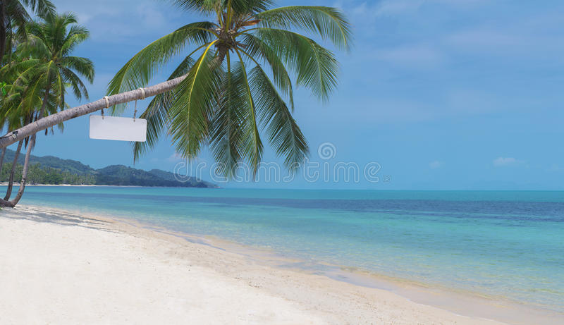 Palma curvada foto de stock royalty free