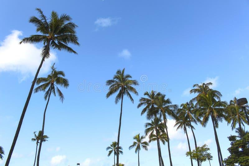 Palma da árvore da praia de Havaí Honolulu imagens de stock royalty free