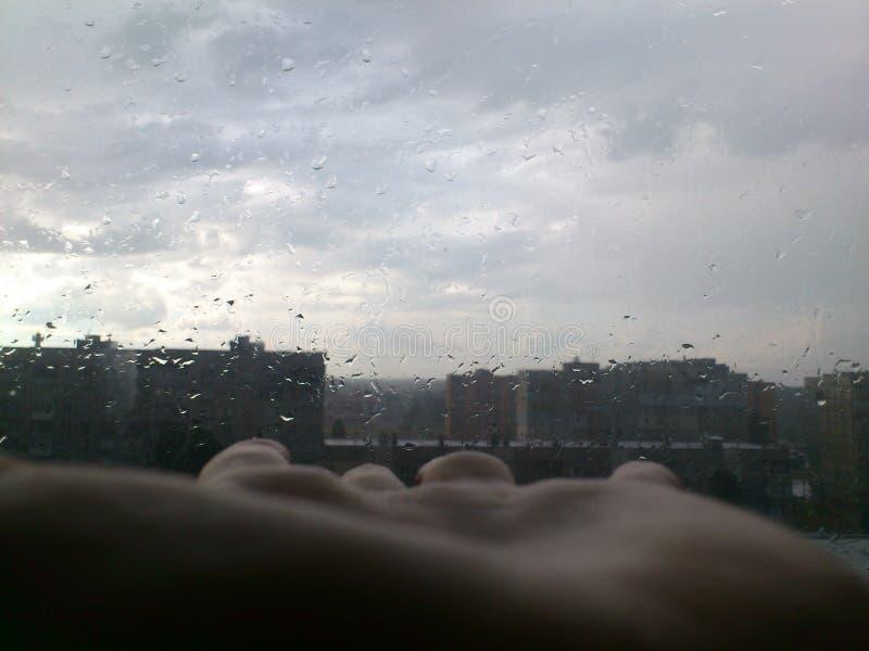 Palma da imagem e chuva do verão fotos de stock