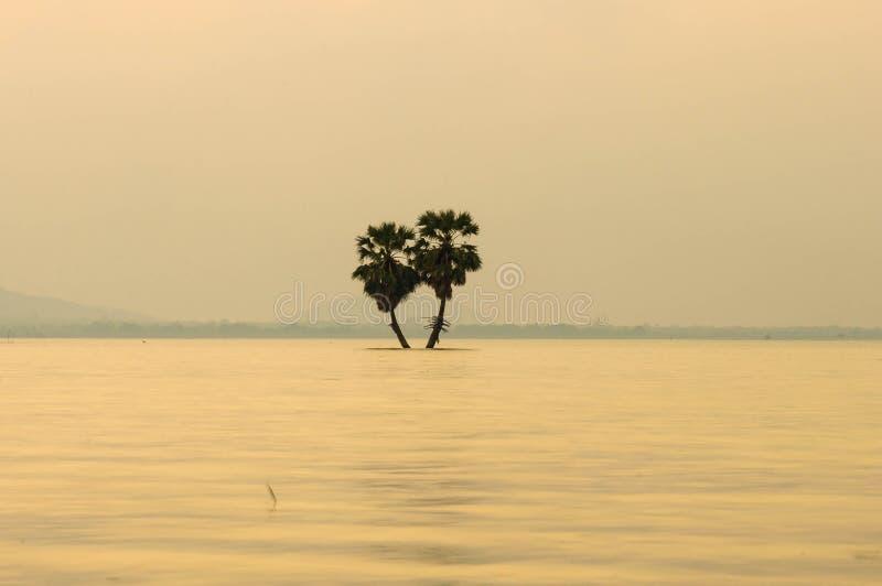 Palma da zucchero sul fiume con il fondo leggero di vista di tramonto immagine stock libera da diritti