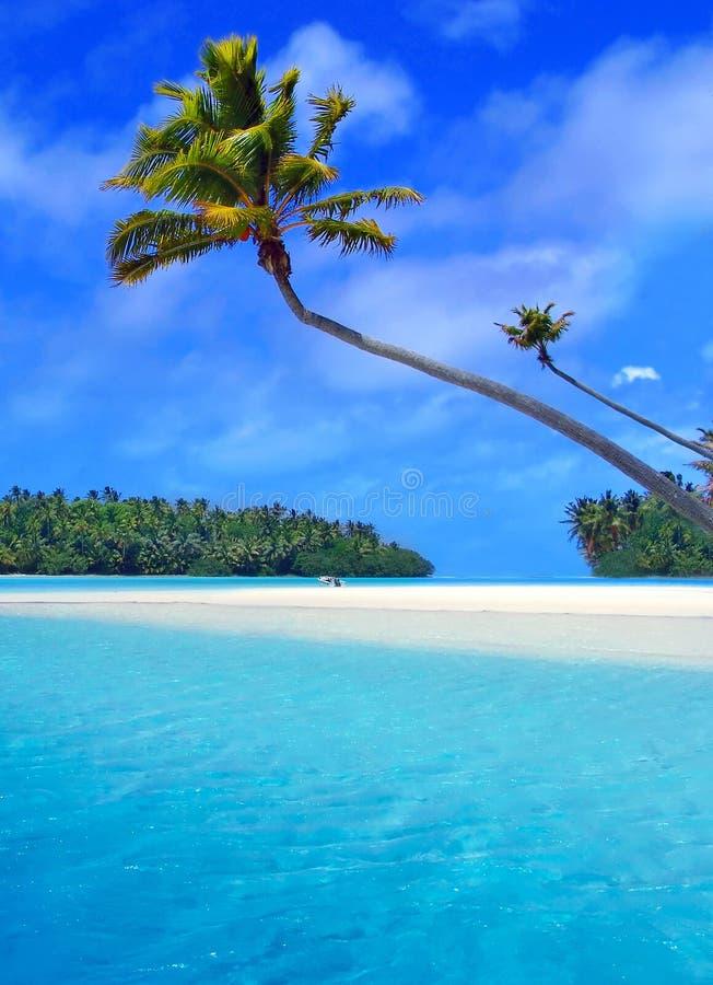 Palma de Aitutaki fotos de archivo