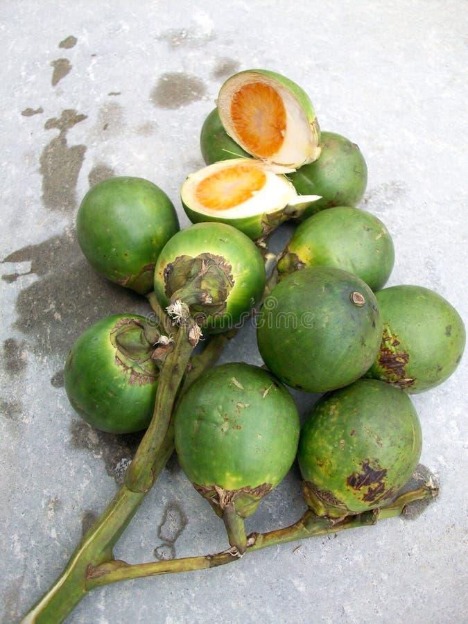 Palma de betel imagen de archivo libre de regalías