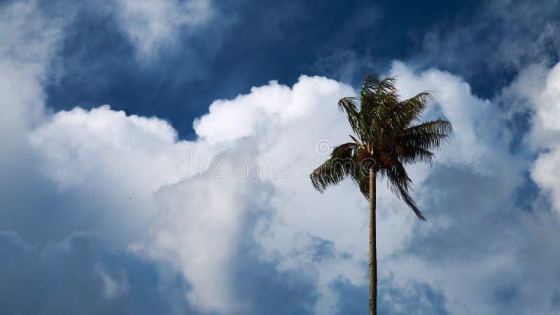 Palma de cera alta no vale de Cocora, Colômbia imagens de stock royalty free