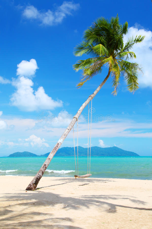 Palma de coco com balanços na praia foto de stock royalty free