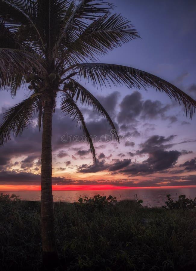 Palma de coco en la puesta del sol fotos de archivo libres de regalías