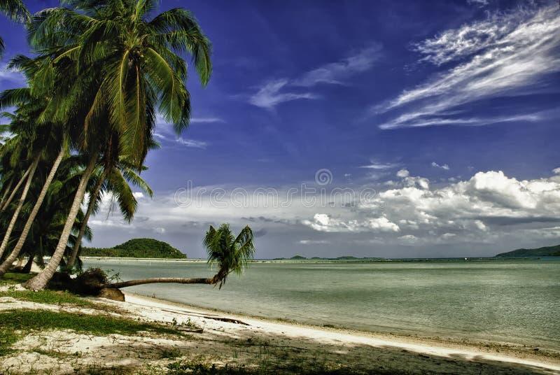 Palma de coco que pendura sobre a água foto de stock royalty free