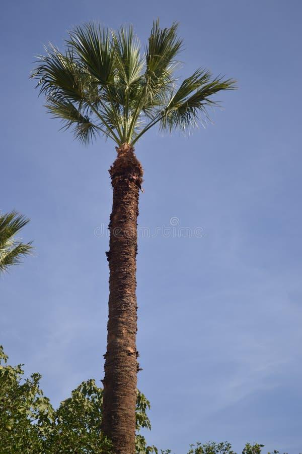 A palma de coco só fotos de stock royalty free