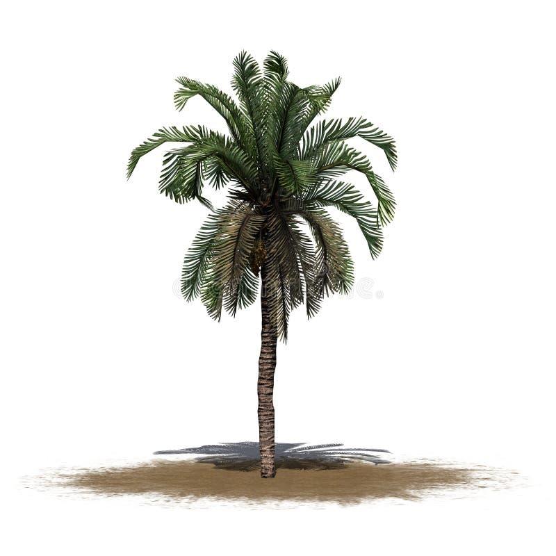 Palma de data em uma área da areia ilustração do vetor