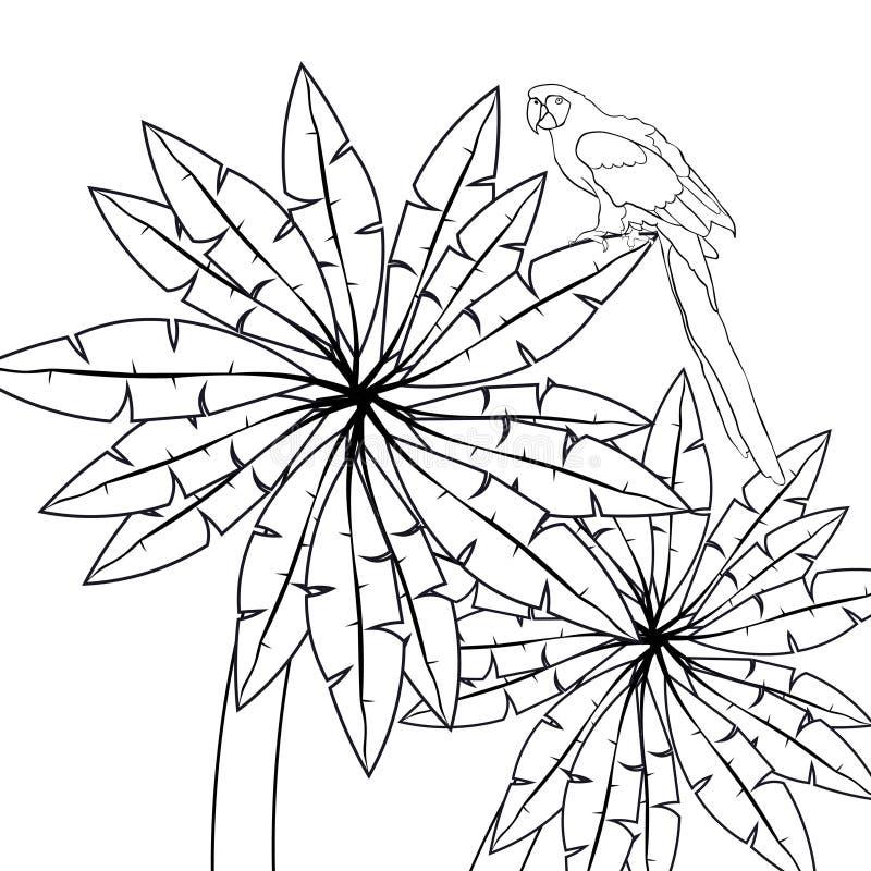 A palma de Havaí da coloração e o ouro das caraíbas do papagaio vector o illustrati ilustração do vetor