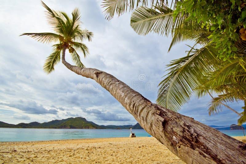 Palma de inclinação em uma praia tropical fotos de stock
