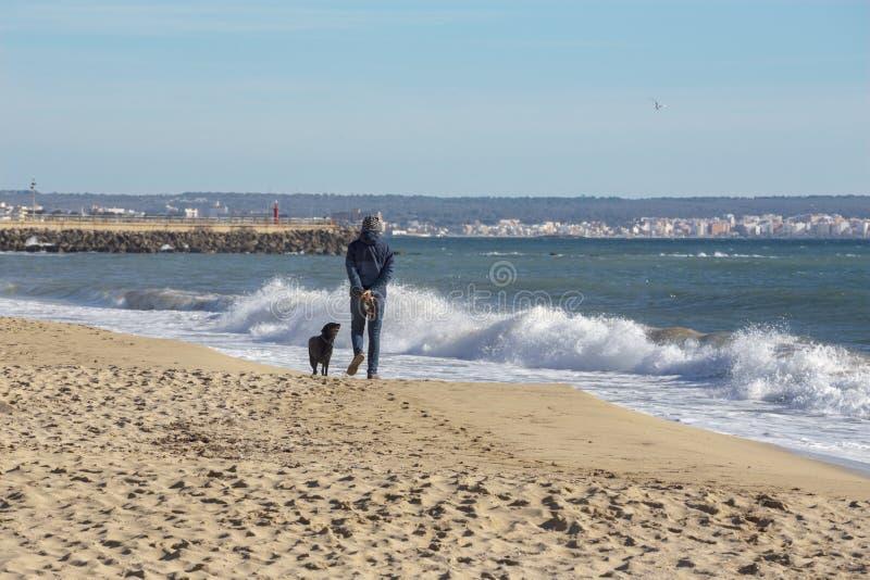 Palma de Mallorca - la playa de la ciudad y y el hombre en el resto con el perro fotos de archivo