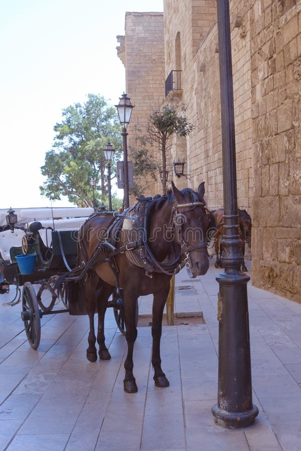 Cathedral of Santa Maria, as well as La Ceu. A tired horse harnessed to the carriage near the walls of the cathedral awaits touris royalty free stock image
