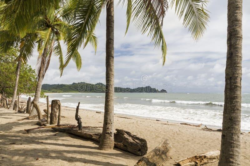 Palma de Playa Garza e cerca da madeira lançada à costa imagens de stock royalty free