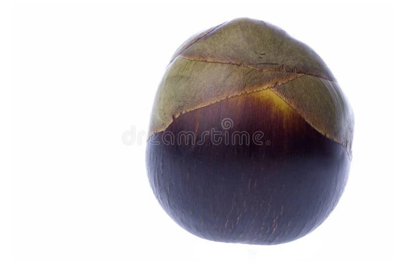 Palma de Toddy fresca isolada imagem de stock