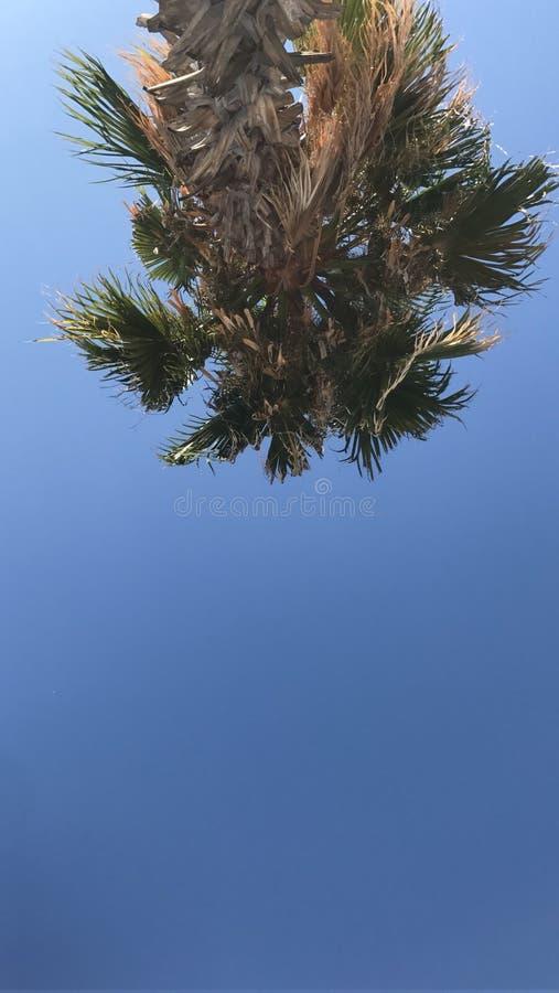 Palma del cielo immagini stock
