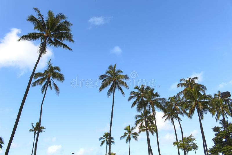 Palma dell'albero dalla spiaggia delle Hawai Honolulu immagini stock libere da diritti